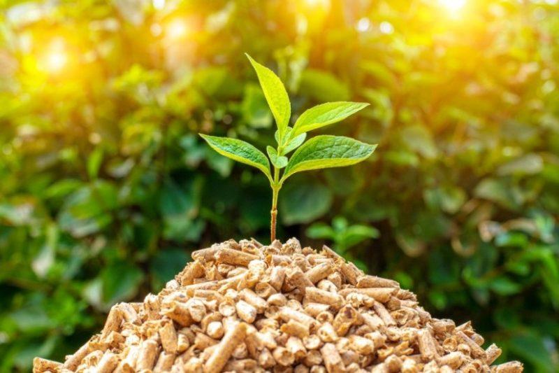 Srbija prepoznala potencijal i značaj biomase
